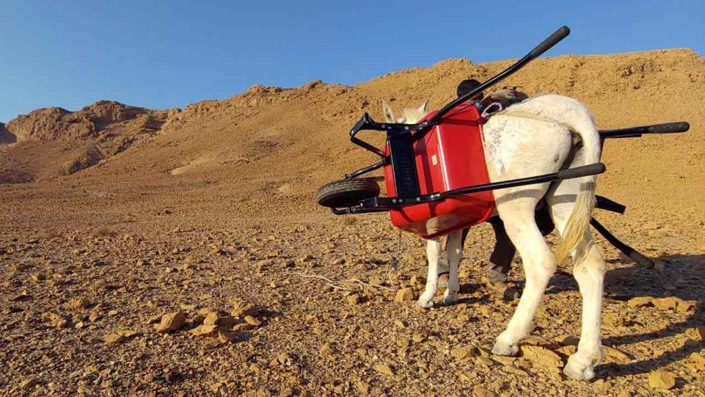שביל ישראל לאופניים - הובלה בעזרת חמורים